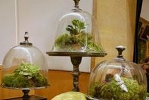 Glass container gardening / by Stacey