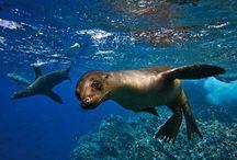 Galápagos - Equador / Fotos de pontos turísticos do Equador