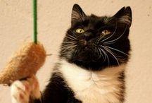 """Koty do adopcji / Koty pod opieką Fundacji Pomocy Zwierzętom """"Kłębek"""" przeznaczone do adopcji."""
