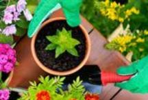Gardening and Landscaping Tips