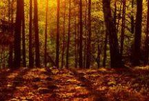Analiza kolorystyczna: Głęboka Jesień (Deep Autumn) / http://arsenicmakeup.blogspot.com/search/label/analiza%20kolorystyczna