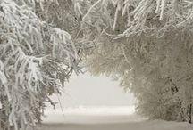 talvikuvia / kauniita talvimaisemia