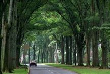 Carolinas Homes for Lease / If you're looking for a great home in the Carolinas, Invitation Homes has one of the most extensive listings of premier rental homes.  With more than 2,000 single-family homes on the market today, our houses feature premium amenities like upgraded kitchens and floor plans.  Find your perfect house for lease at www.invitationhomes.com/market/the-carolinas.