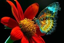 Butterfly...such delicate beauty