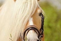HORSES...what a beauty