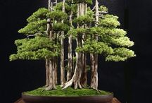 Bonsai and its beauty