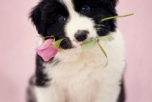 Puppies / by elly gay