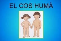 Projecte: El cos humà