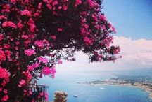 sea and flowers always together / by giovanna silvestro