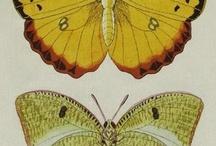 entomologica