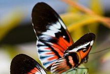 Projecte: Les papallones