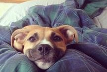 Adorable / cute animals, funny pic of animals!