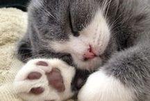 ♡♡  près' tout près du chat  ♡♡ / by ~•✿•~Danielle Velo~•✿•~