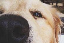 Dog and Love
