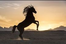horse photography / Pferdefotografie Pferdebilder
