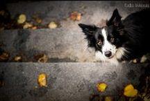 dog photography / Hundefotografie, Hundebilder