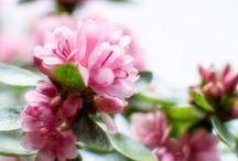 Foto: Frühlingsblüten