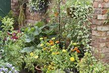Garten: Kräuter