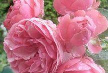 ★ Flores