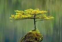 Foto: Bäume
