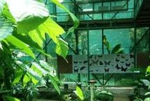 www.butterflyfarmcostarica.com / The butterfly conservatory will introduce you to the fascinating world of the Lepidoptera. You will be surrounded by 25 species of butterflies in free flight, all of which are native of the area. Admire the Giant Blue Morpho and the Owl Butterfly.  This didactic experience will provide insight into the butterflies' life cycle and metamorphosis: egg, larvae, pupa and butterfly, the plants in which they live and their diet. Costa Rica.