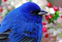CR//aves / Aves del mundo www.centrorescateparaisocarlisa.com