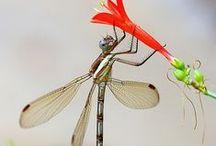 CR//insectos / Insectos del mundo www.centrorescateparaisocarlisa.com