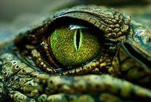 CR//reptiles / reptiles del mundo www.centrorescateparaisocarlisa.com www.hotelparaisocarlisa.com