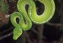 CR//serpientes / serpientes del mundo www.centrorescateparaisocarlisa.com www.hotelparaisocarlisa.com
