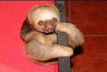 CR//sloth