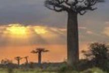 Madagascar / Découvrez l'île continent avec Les Covoyageurs !