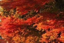 The Color of Autumn / See and Hear the Beauty of Nature! / by Earth Provides