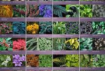 Color Your Garden! / by Earth Provides
