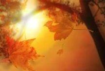 Autumn Beauty / the beauty of autumn / by rebecca garden