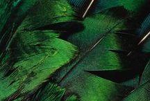 VIBRANT GREEN ((((O))))