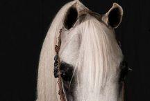 Arabian horse / Idéer till hästarna