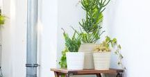 Balkon & Dachterrasse | Deko Ideen, Pflanzen & Co.