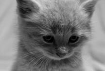 cuteness  / by Mia