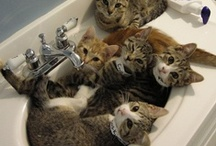 Cats! / Time spent with cats is never wasted. ~May Sarton