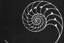 Fibonacci / by Meta Lin