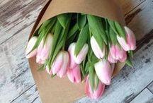 Spring love / by Mariann Gilicze
