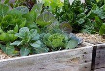 Raised Garden Beds / Raised Vegetable Garden Bed Design Ideas