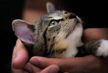 I Love Tabbies / Tabby cats / by Lynda Eastgate