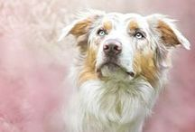 Iʄ I ɦαɖ a ɖσɠ / My love for dogs <3 Hopefull I will have one someday