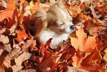 Fall in Ottawa Canada