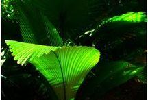 Natural Light Inspiration