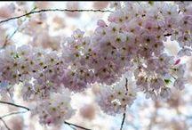 Canada Blooms: Gardens / by Vacay.ca