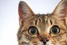 Cat / All about cat. Cuuuuute cat.