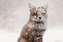 >>winter<<