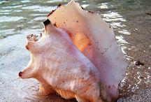 Shells, Sea live & Sea Glass / by Frank H